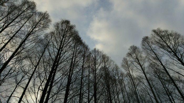 春 中央公園